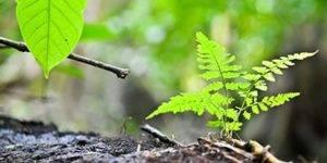 Brotes de plantas