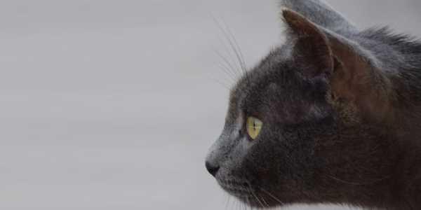 Cabeza de un gato